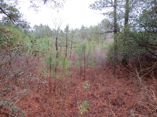 Photo of Taylor's Island Wildlife Management Area