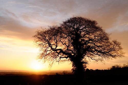 wrexham coedpoeth winter 2016 nikon d7000 dxo dawn sunrise sun northwales landscape tree oak 500px
