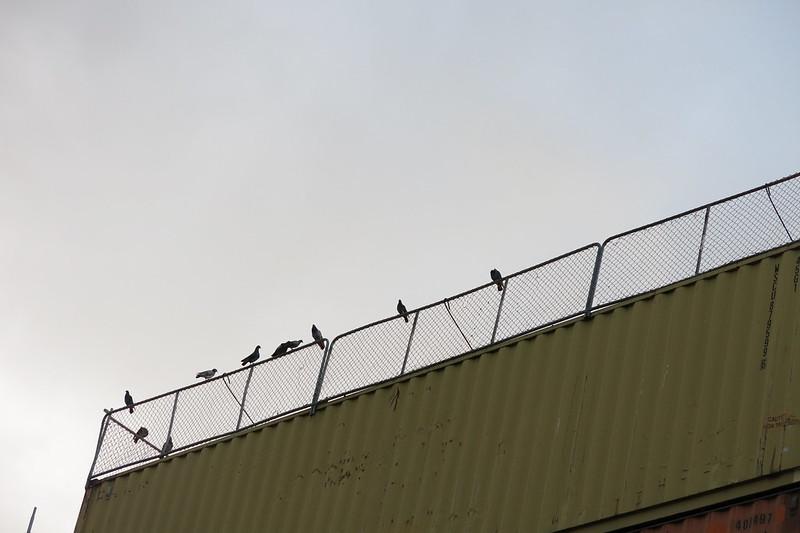 Pigeons, Lichfield Street