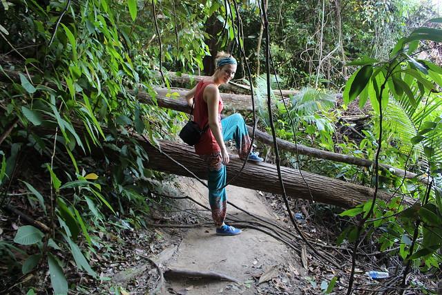 Junglepad betekent avontuur