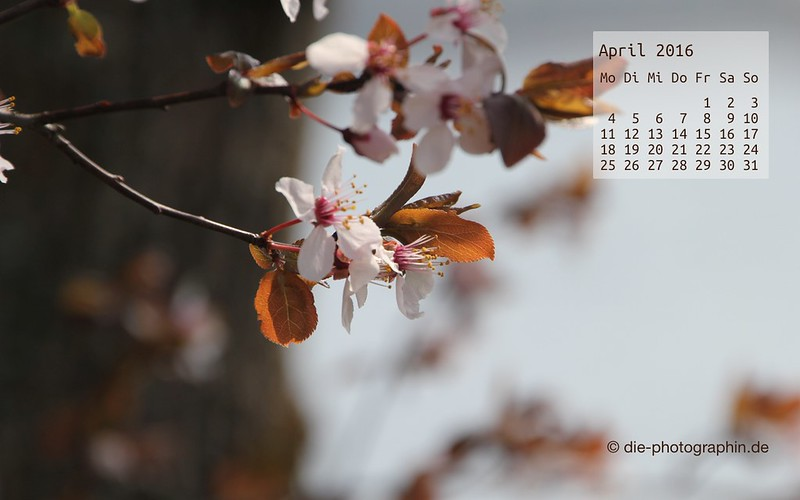 apfelblueten_april_kalender_die-photographin