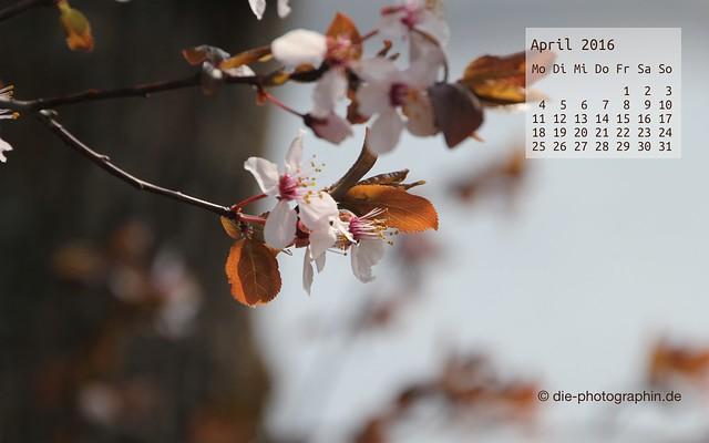 apfelblueten_april_kalender_die-photographin