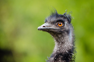 emu | by Mathias Appel