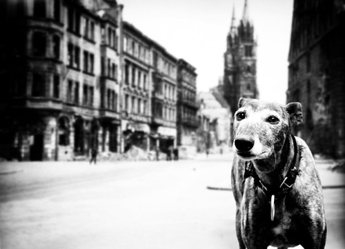 Dog in WWII Europe | by Keysgoclick