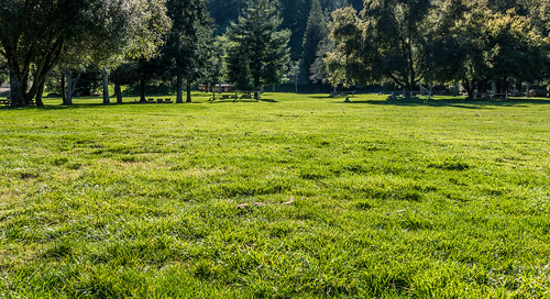 california park ca trees plants plant tree green nature public beautiful field grass leaves rural forest woodland relax landscape outside outdoors healthy scenery picnic pretty solitude day quiet afternoon place natural outdoor background space saratoga country meadow peaceful sunny fresh shade land remote leisure siliconvalley verdant recreation lush relaxation santacruzmountains idyllic enjoying shady tranquil parkland grassy picnicspot nonurban sanborncountypark santaclaracountyparks