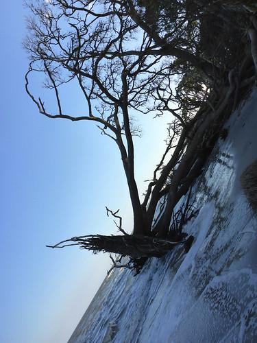 trees beach silhouette silhouettes atlanticocean adamhall huntingisland trackhead trackheadstudios trackheadxxx