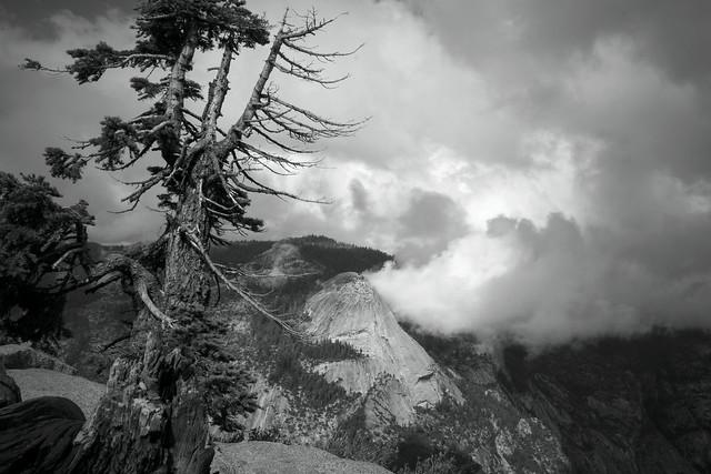 Tenacious: Sierra Strong