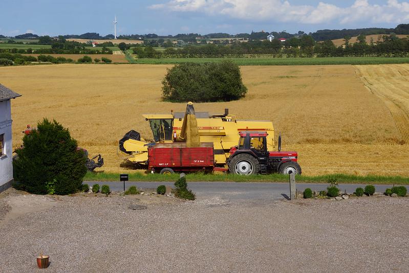 Tjoernbjerg-Marker-2013 (10)