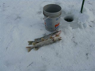 Pêche blanche - Contrecoeur - 03 fév 2010 029