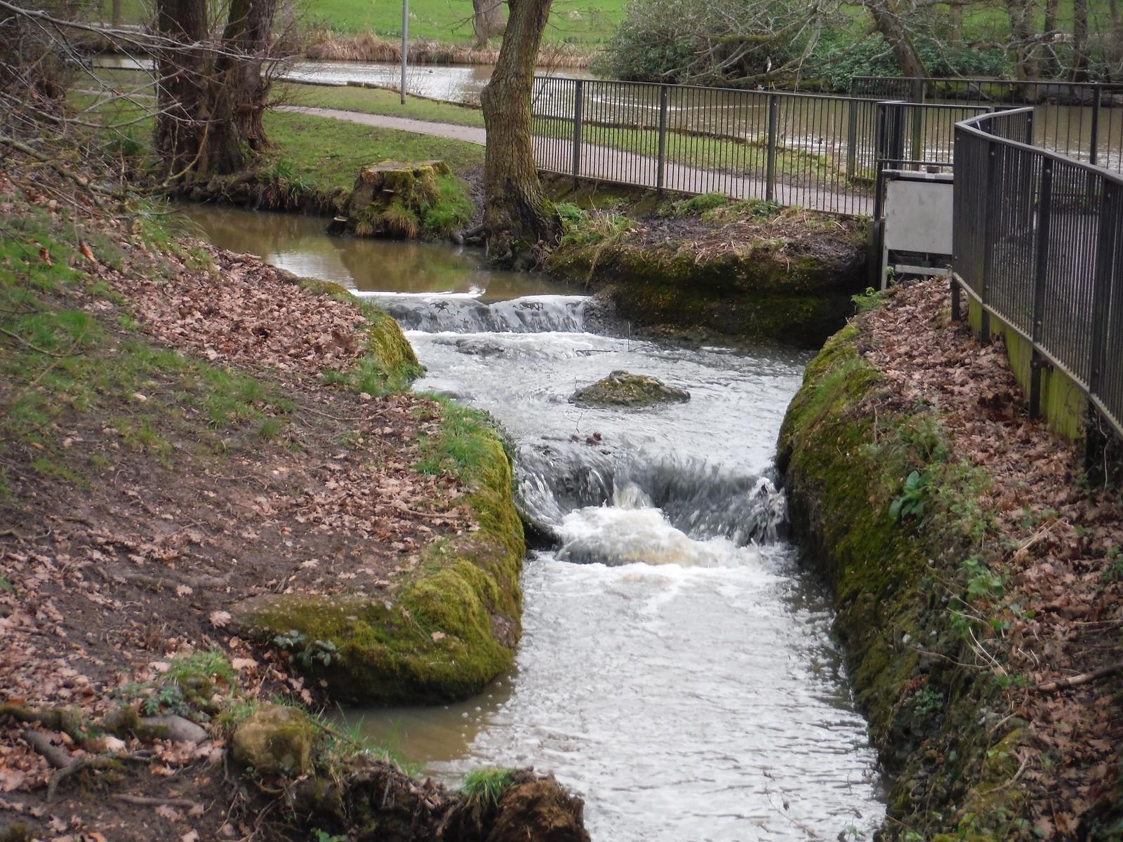 Spittal Brook in Barclay Park SWC Walk 168 Broxbourne Circular