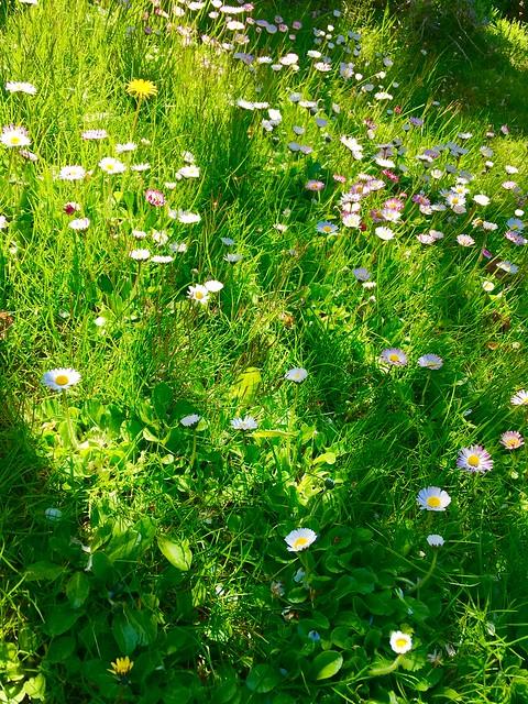 Frühling - Springtime