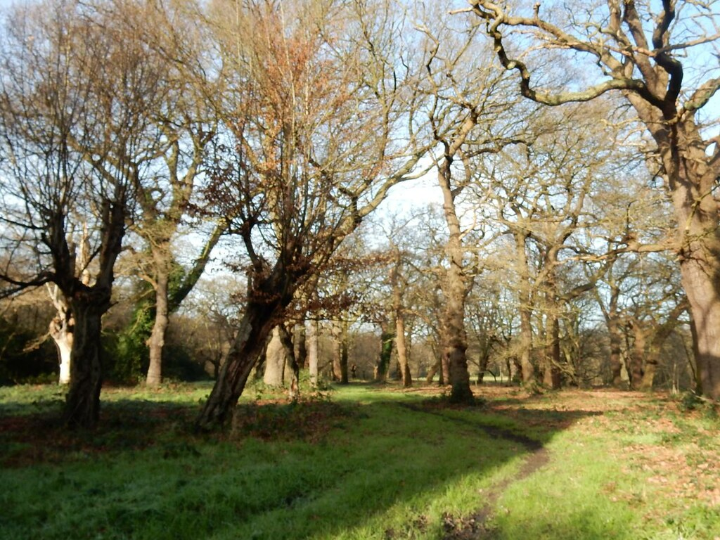 In the forest Epping Forest Leytonstone to Loughton