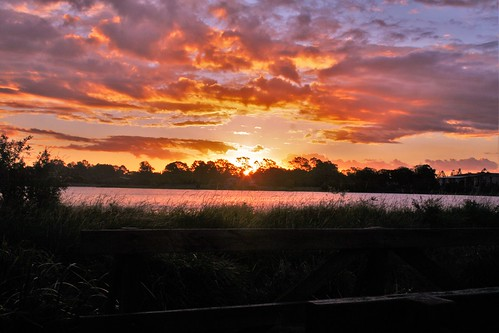 pink trees sunset sky orange sun colour water clouds outside bright lagoon logan longgrass woodenrailing