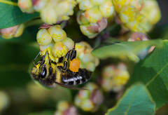 Bee  160316-2664