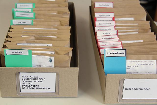 Two cardboard trays holding specimen envelopes.