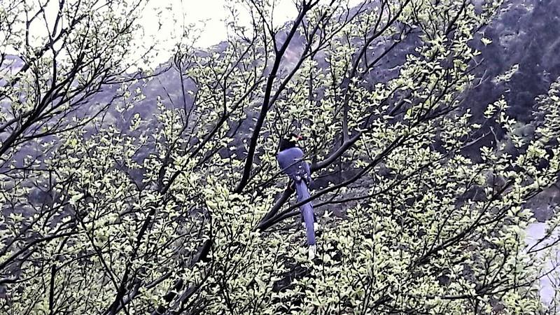 冷水坑鳥 (3)