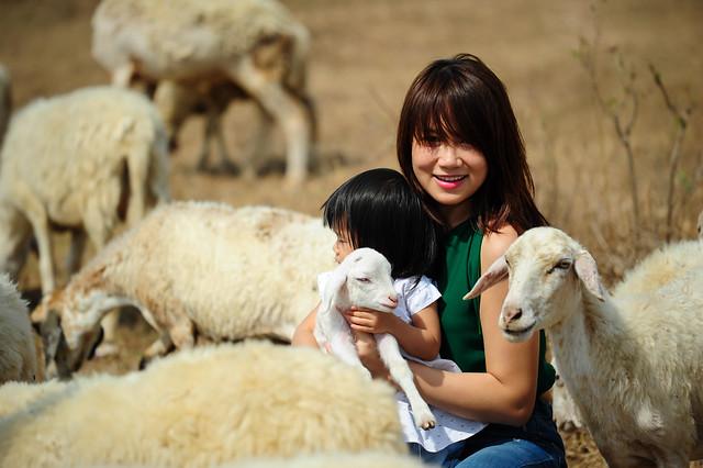 Cô gái chăn cừu