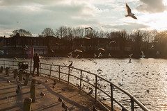 Feeding the birds at Edgbaston Reservoir