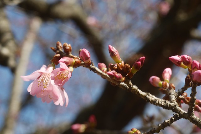 金, 2016-03-11 14:17 - Brooklyn Botanic Garden