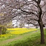 Colors of Spring/春色/春の色