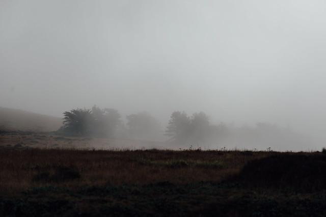 Coastal Mist and Trees