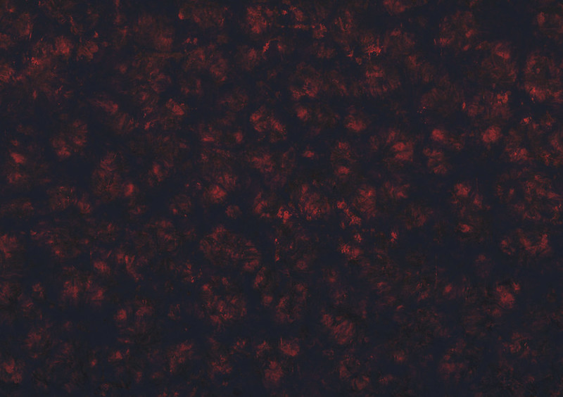 black-and-red-texturepalace-05