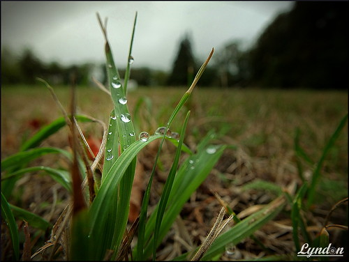 macro nature water up grass rain closeup fuji close gimp droplet xs1 fujifilmxs1 52weeksthe2016edition week122016 weekstartingfridaymarch182016