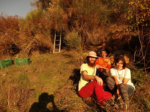 The olive picking gang | by Nathan Mizrachi