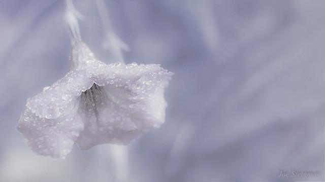 In Her Frozen Beauty