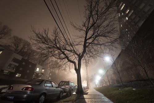 misty tree (35)