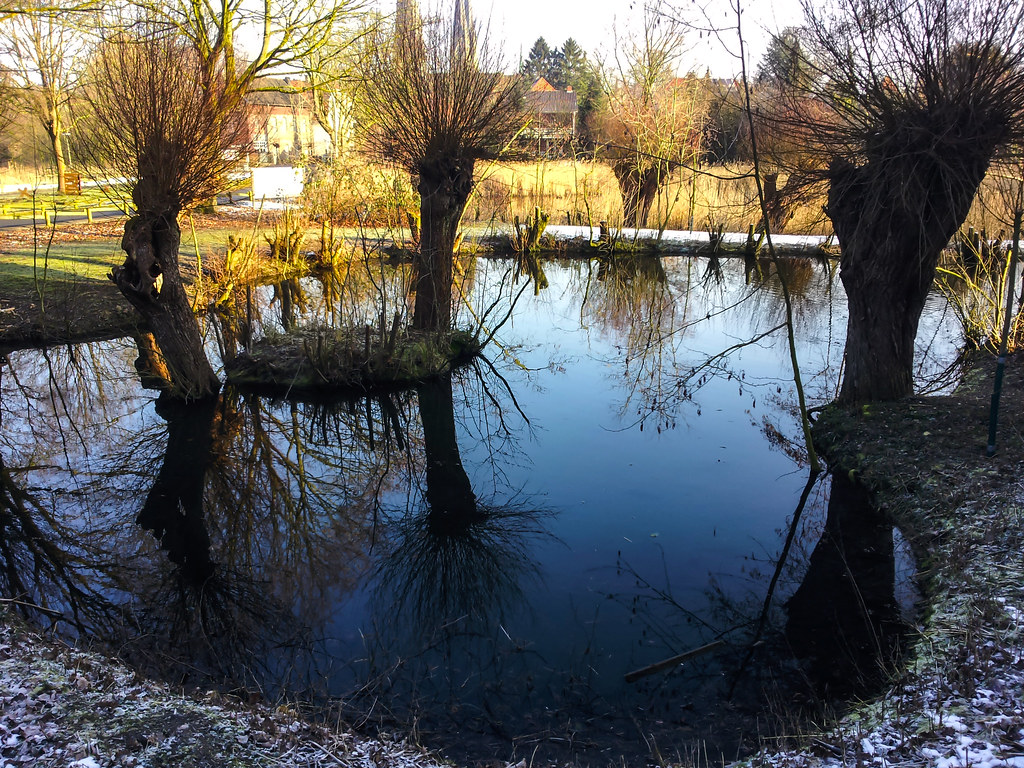 Reflecting Water