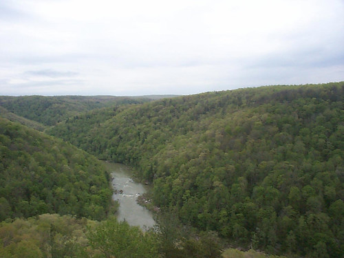 trees tennessee rivers gorges greatoutdoors bigsouthfork southforkofthecumberland