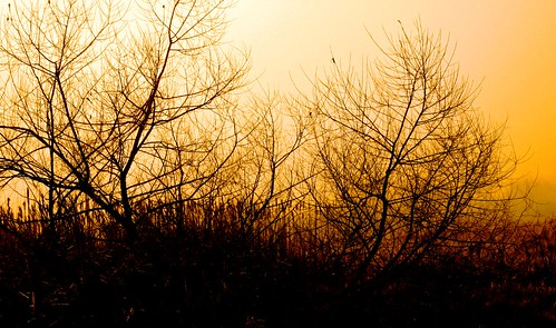 brown art silhouette yellow topv111 fog photoshop sunrise landscape geotagged dawn bush eerie processed faa geo:lat=39337583 geo:lon=77449429