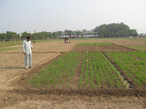 wrc bangladesh aciar wheattrial