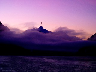 Seagull and Mt Stephens | by Dru!