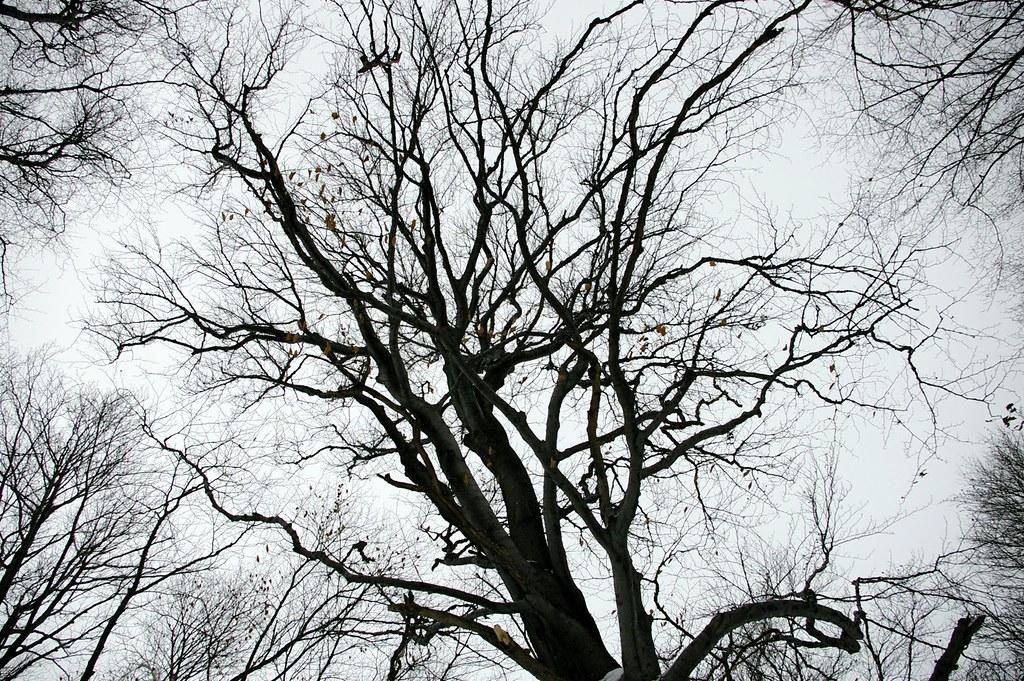 Rozgałęzienie / Branching