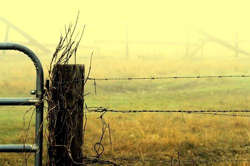yellow fog manipulated fence catchycolors louisiana barbedwire mrgreenjeans gaylon instantfave canonef100mmf28macrousm gaylonkeeling