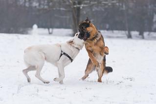 Play | by Soren Wolf