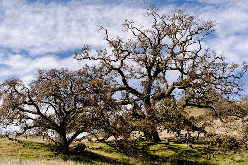 california travel blue usa cloud white mountains color colour tree green nature landscape outside photo nikon unitedstates sunol nikkor35mm
