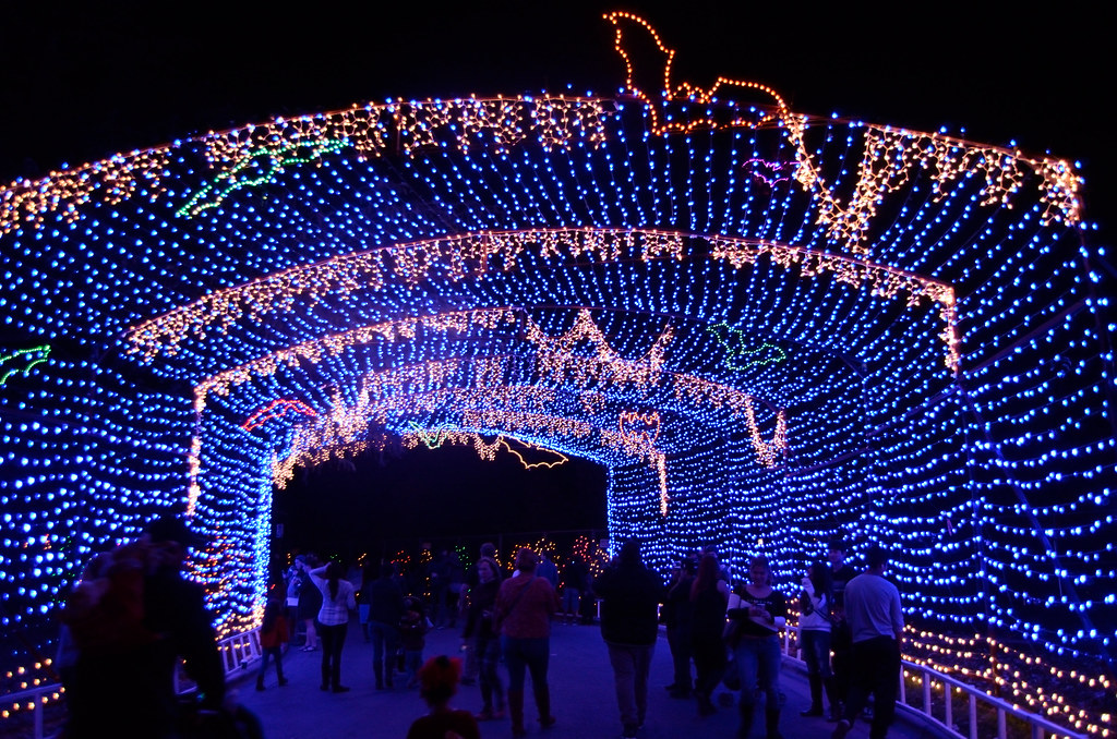 "Image result for trail of lights"""