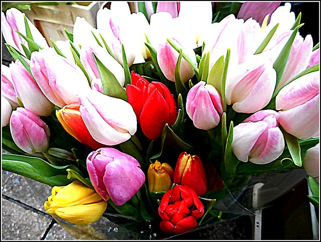 Lovely Bunch of Tulips ..