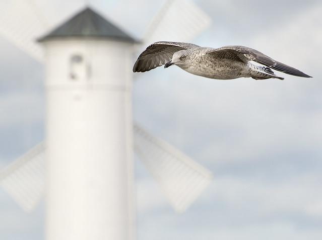 Windy flight