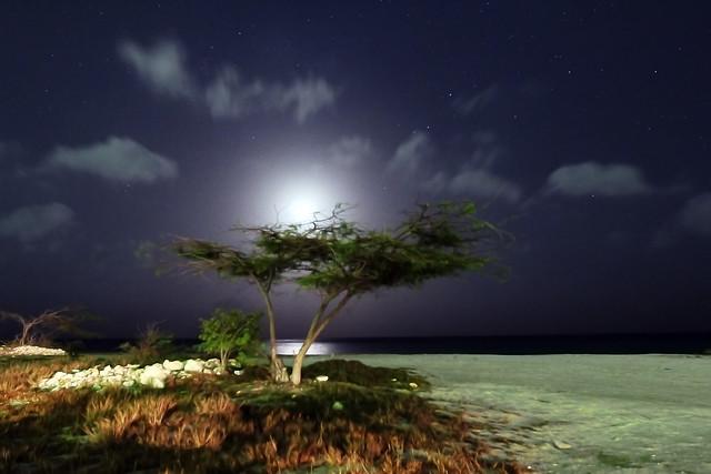Aruba Astrophotography Moonlight and Tree
