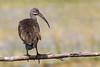 Bird on a fence by Pascal Bernardin