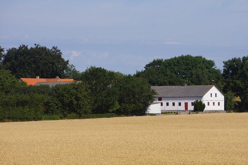 Tjoernbjerg-Marker-2014 (2)