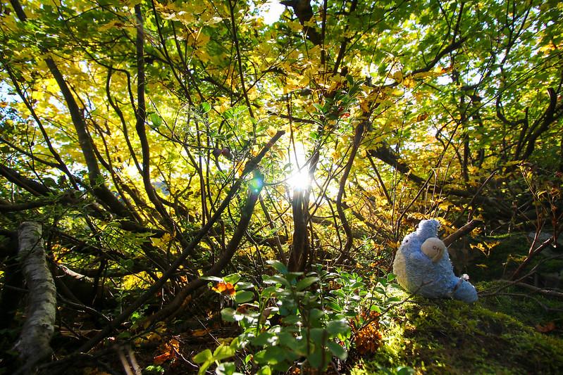 2014-09-28_00161_栗駒山.jpg