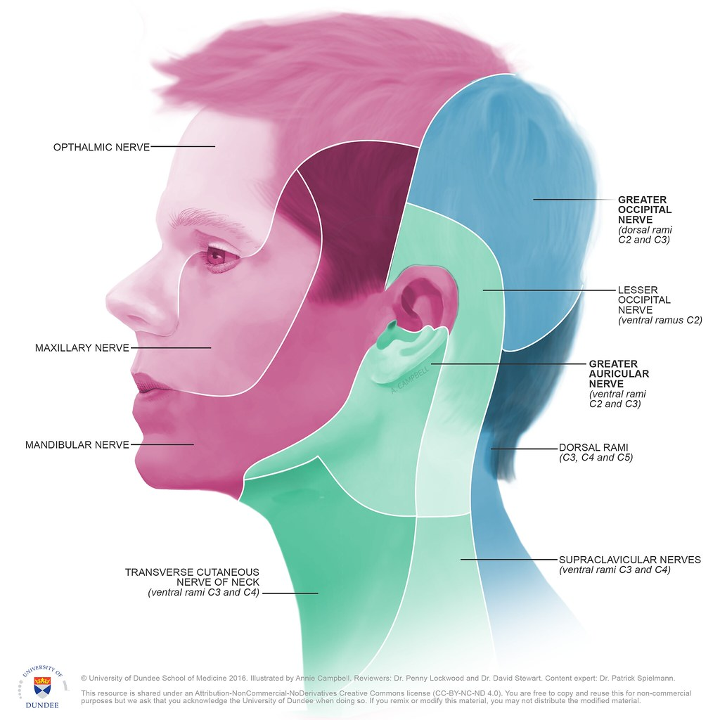 Dermatome map of head by Annie Campbell | © University of Du… | on