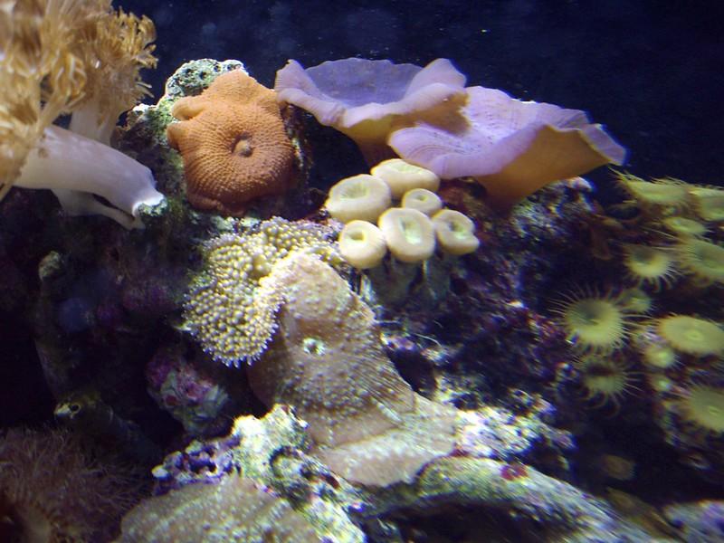 08192007 Saltwater Fish Tank (21)