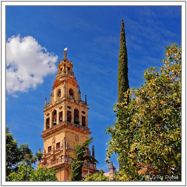Le clocher et le cyprès