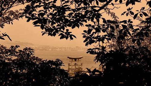 trees nature monochrome leaves japan architecture hojas arquitectura puerta arboles miyajima entrada spirituality torii japon itsukishima d3000